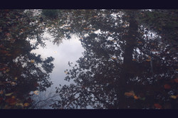 Reflets-automne