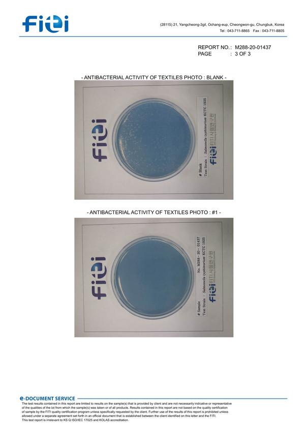 Salmonella typhimurium-3.jpg