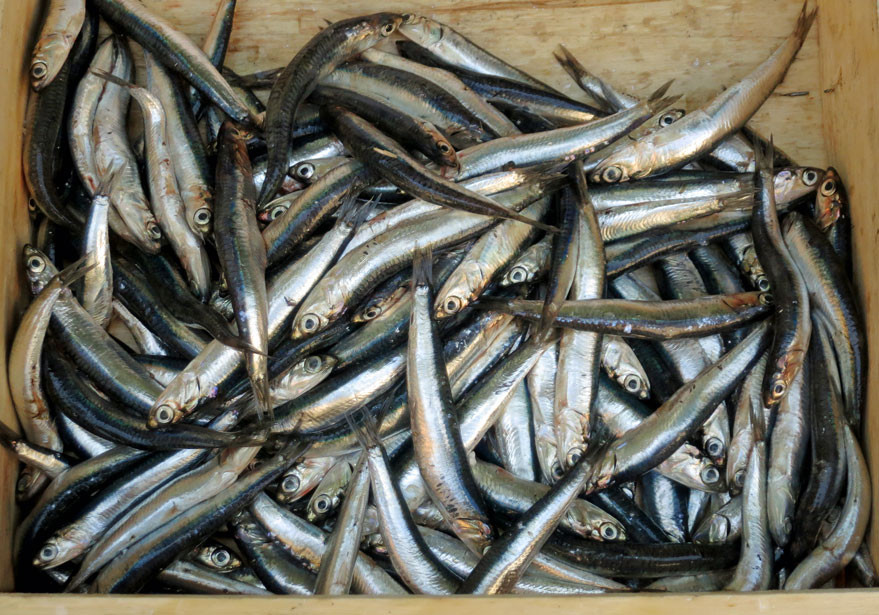 Pan fried fresh anchovy fillets
