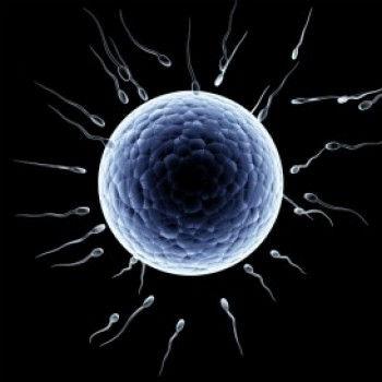 Sperm-Egg Donation