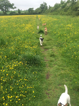 BB Pet Care - Dog Walker Calne