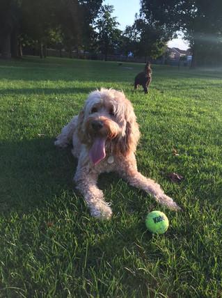 Dog Walker Calne