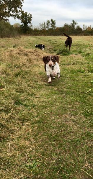 BB Pet Care - Dog Walker Chippenham