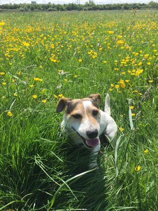 BB Pet Care - Dog Walker Calne