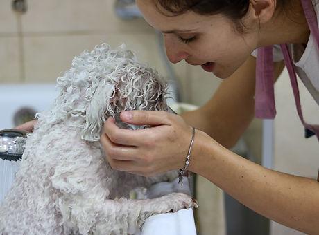 Kupanje i feniranje pasa.jpg