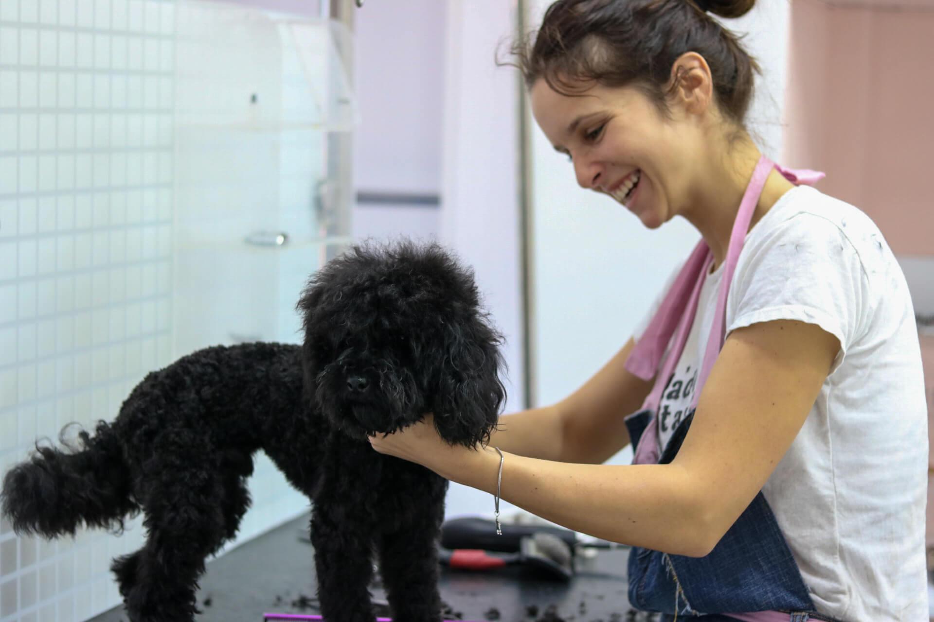 Šišanje pasa - kompletno sređivanje