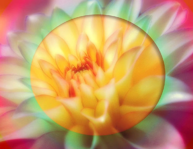lotus-21114_640.jpg
