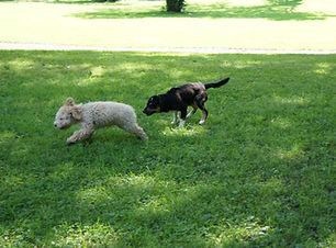 Hund juli 2011 156.JPG