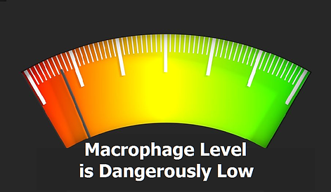 macrophage-level-is-low-new_orig.png