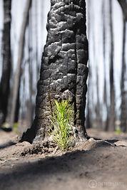 One Tree Planted-57.jpg