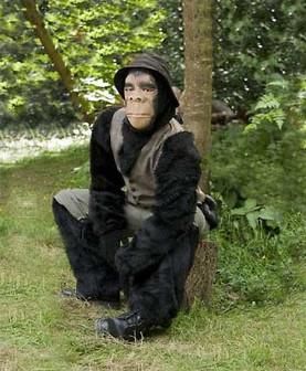 The Chimps