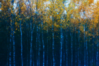 K8_Autumn_impression_MF.JPG