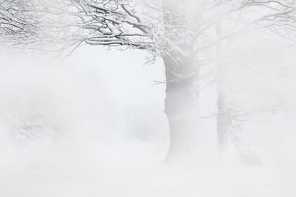 Winter mood.JPG
