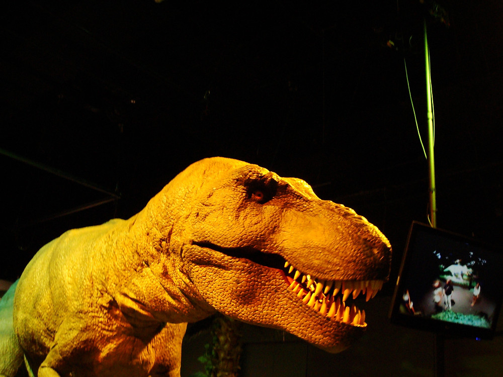"An ""animatronic"" T. Rex at the Field Museum in Chicago"