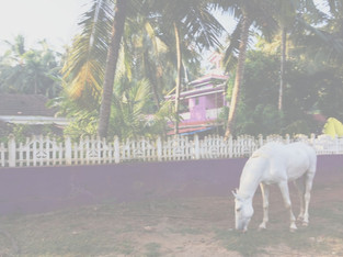 "TRAVEL// ""Goa, India."" // by Kelly Mason"