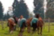 White Horse Ranch - auf dem Weg zur Weide