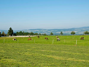 White Horse Ranch - Weiden