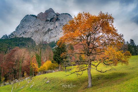 Herbstbaum und Grosser Mythen