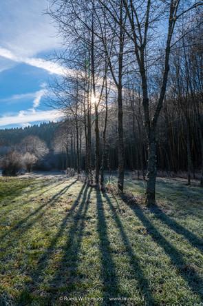 Schwarzwald-Waldrand-Schatten-Sonnenster
