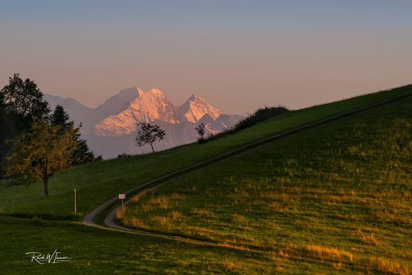Mönch Eiger und Jungfrau mit Baum und Weg vom Michaelskreuz aus quer_DSC6218-Signet-web.jp