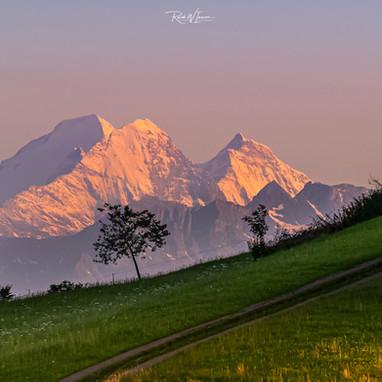 Mönch Eiger Jungfrau Tele ganz nahe mit Baum und Gebüsch_DSC6218-Signet-web.jpg