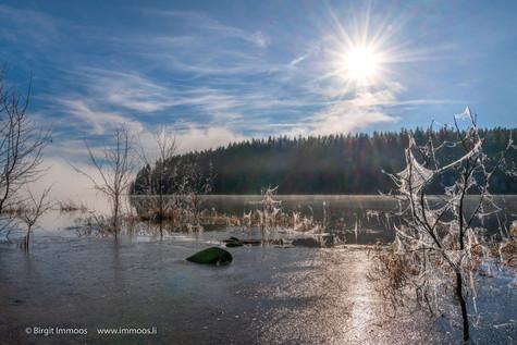 Schwarzwald-Schluchsee-Eis-Spinnennetz-S