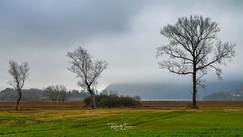 3 Bäume im Sägel