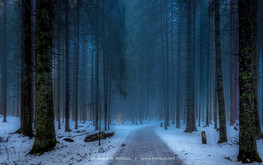 Eisweiher-Waldweg_DSC2517-1-Signet-web.j