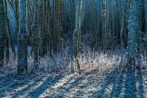 Schwarzwaldr-Raureifwald-kaltes-Licht_DS