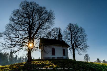 Gründelkapelle-Sonnenstern-im-Baum-Herbs