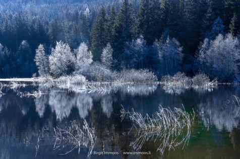 Schwarzwald Rauhreifspiegelung Schluchse