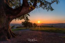 Sonnenuntergang Richtung Westen mit Baum und Blendenstern Michaelskkreuz_Z623783-Signet-we