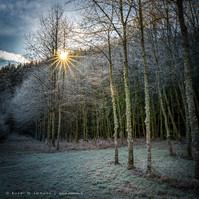 Schwarzwald-Waldrand-Raureif-Wiese-Sonne