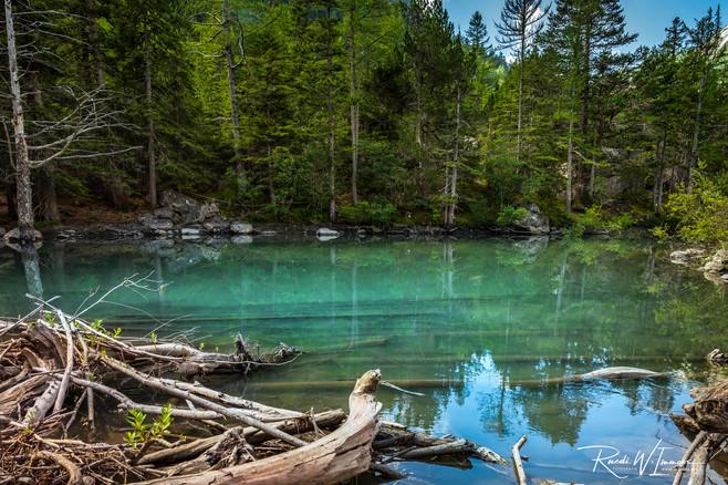 Dérborence Gebirgsurwaldsee grün mit Baumstämmen_Z624739-Signet-web-1.jpg