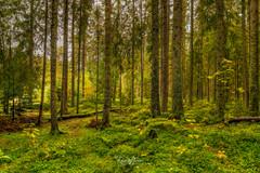 Schwarzwald Titisee Waldstück_DSC0091-S