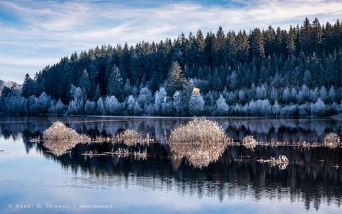 Schwarzwald-Schluchsee-Waldrand-Raureif-