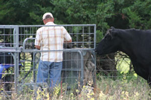 SafetyZone Calf Catcher