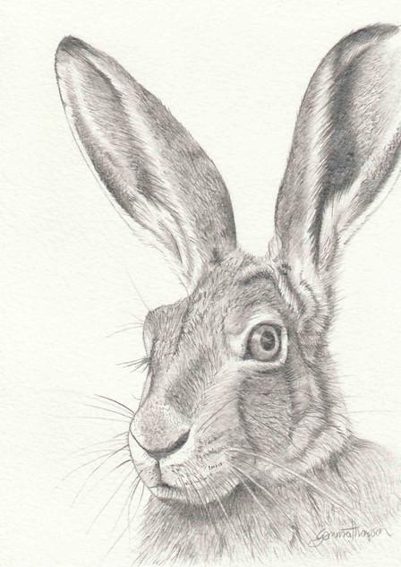 Hare Original