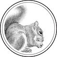 GTAA_Squirrel.jpg