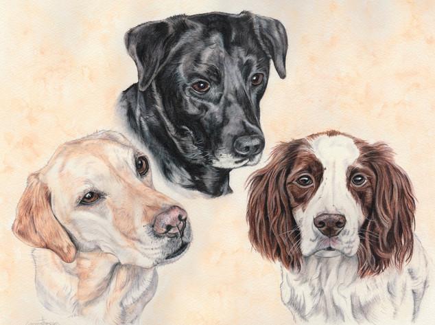 Tilly, Shadow & Cracker