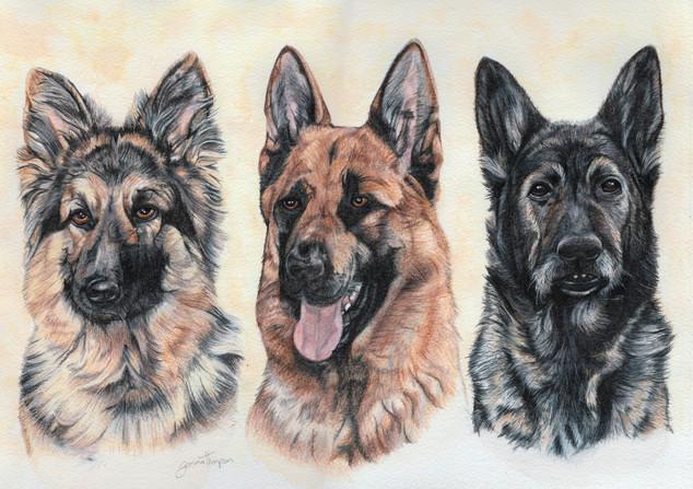 Kyle, Jake & Odin