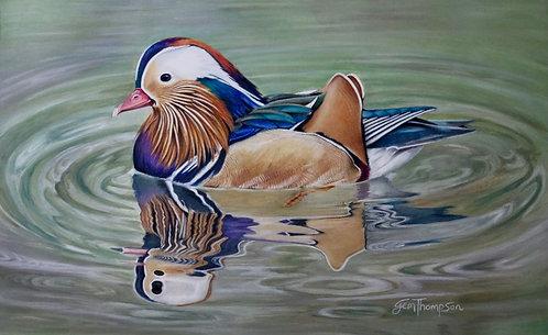 'Mandarin Meandering' Fine Art Print