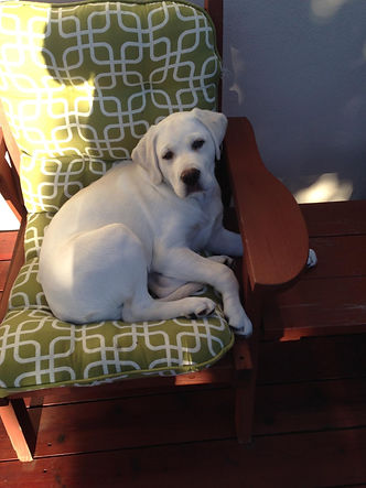 Prepare for Your Stofer's Labs Puppy: Establish Family Rules