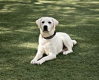 puppy and dog training