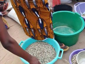 Seeds Distribution
