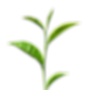 Green-Tea-PNG-Free-Images.png