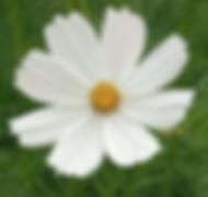 Screen Shot 2019-10-20 at 10.46.58 PM.pn