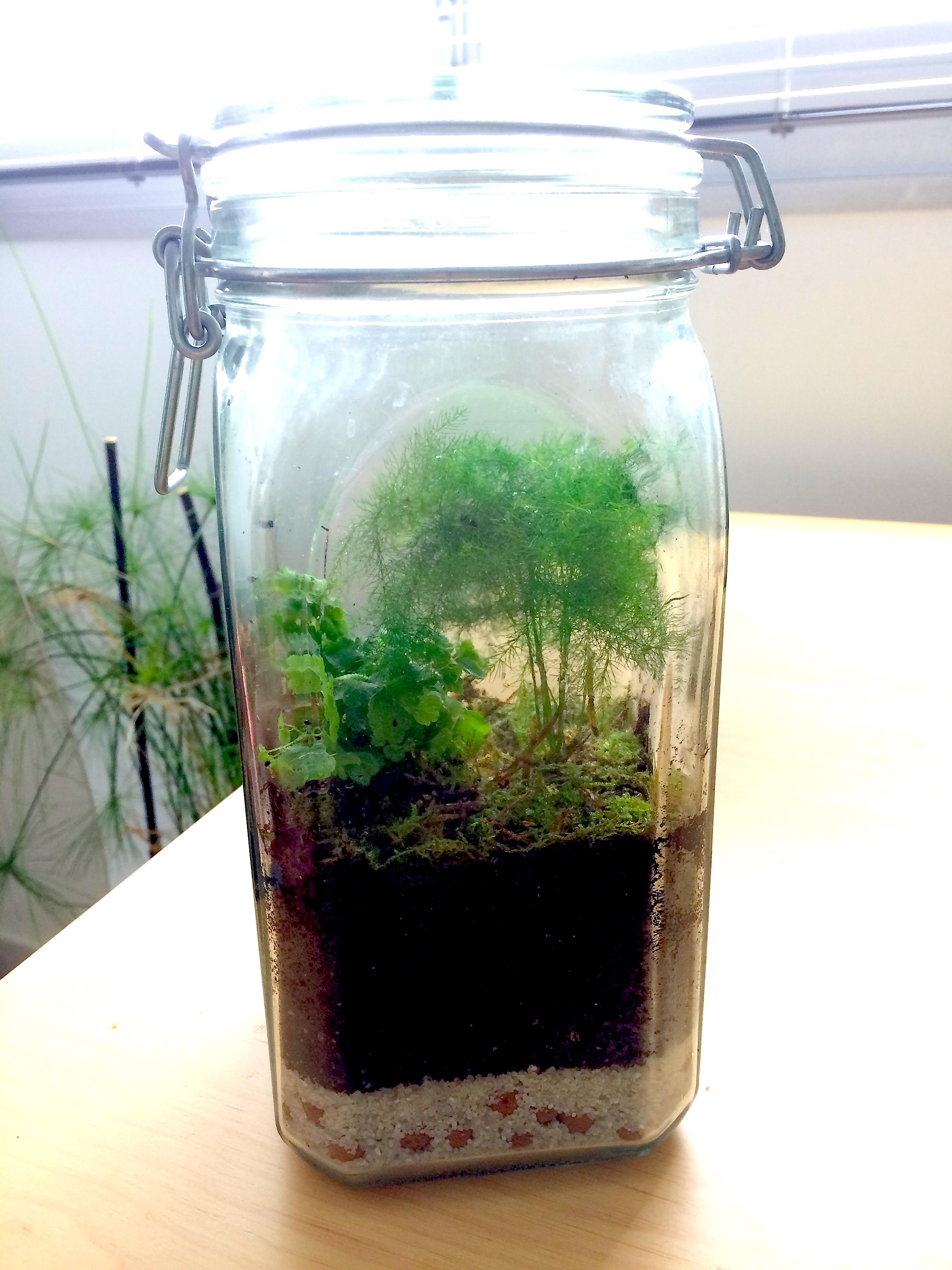 Terrarium Fermé Plante Grasse comment réaliser un terrarium végétal ? diy plantes et
