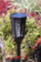 Flame Light in Garden.JPG