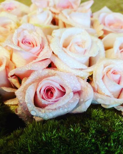 #fresh Moss and roses.jpg